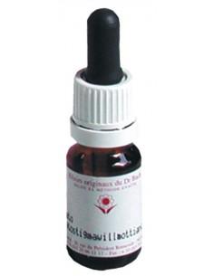 Elixir floral N° 12 Gentian Gentiane