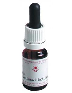 Elixir floral N° 19 Larch Mélèze