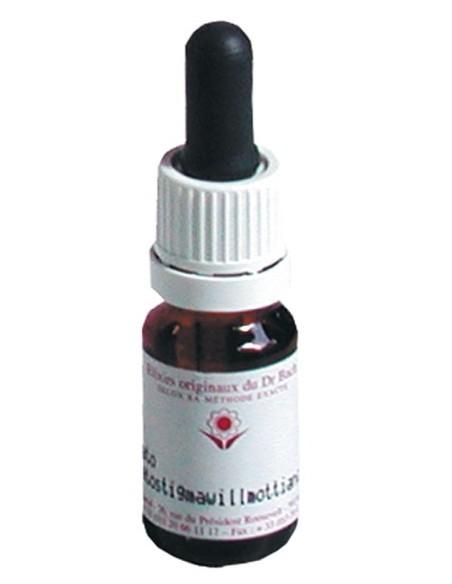 Elixir floral N° 28 Scléranthus Scléranthe
