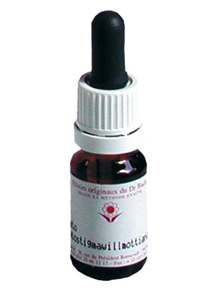 Elixir floral N° 35 White Chestnut Marronnier Blanc