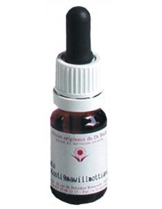 Elixir Floral N° 38 Willow Saule