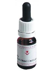 Elixir floral N° 8 Chicory Chicorée