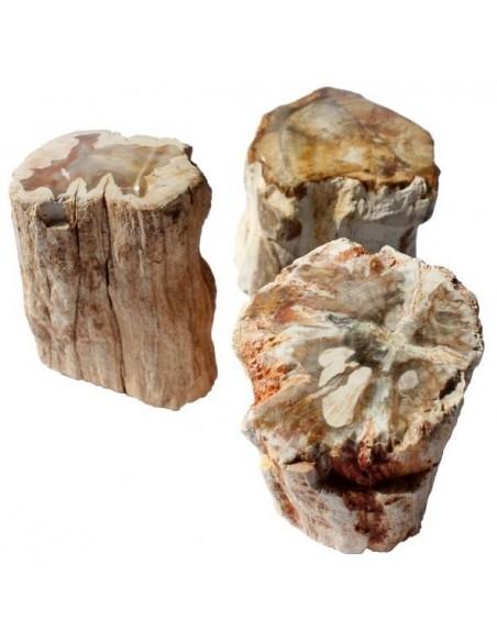Bois fossilisé - Lot de 3 morceaux